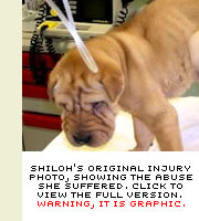 Shiloh's injury photo